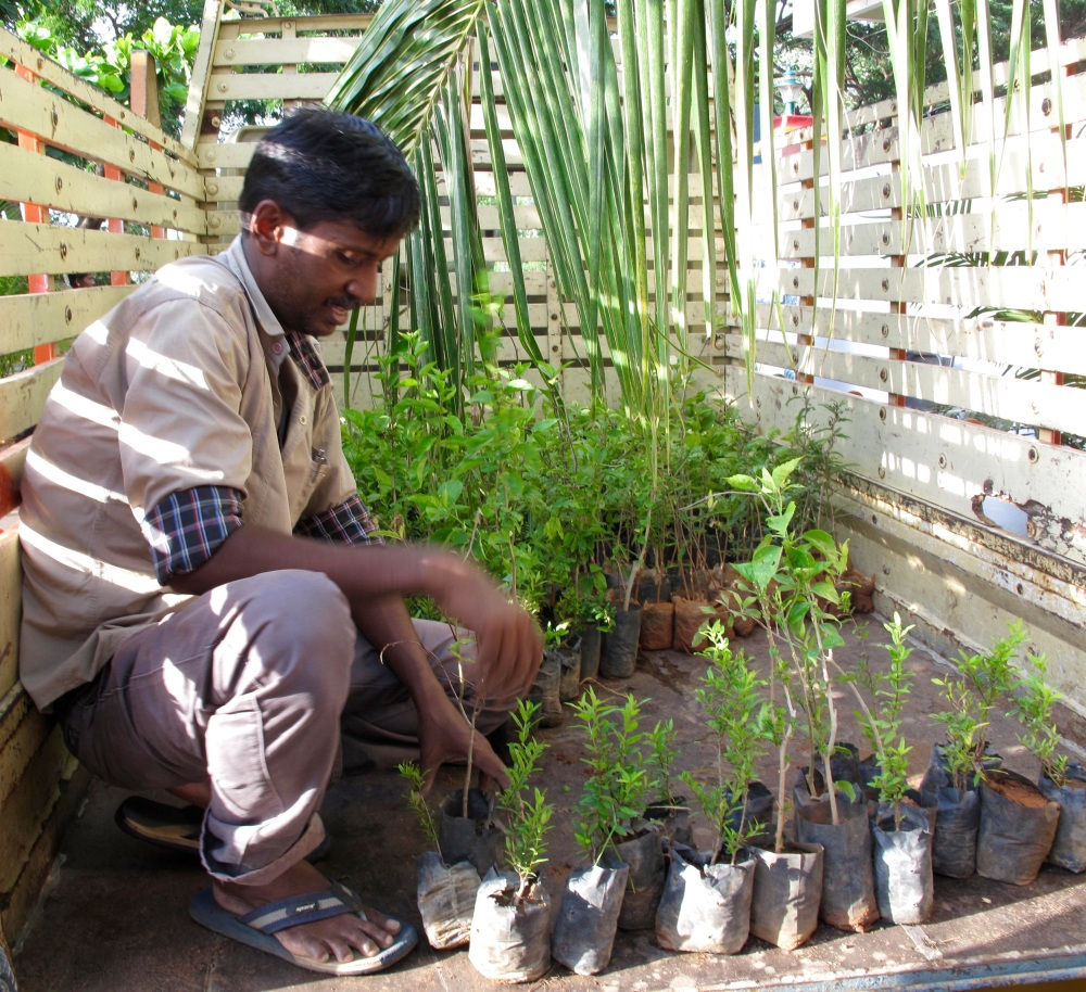 In a nearby nursery, an Artist friend loads a truck of seedlings; villagers have requested them to be be planted in their village.
