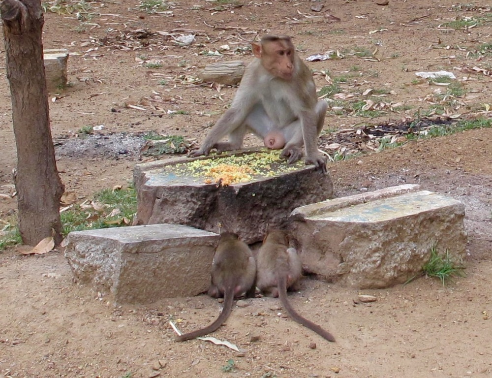 The king enjoys a leisurely snack while two minions wait patiently for his leftovers.